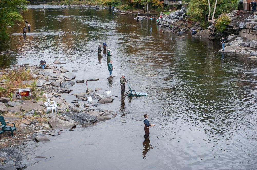 Photo gallery salmon river pulaski ny daily fishing for Pulaski ny fishing report